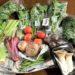 赤ちゃん・子どもに安心安全でおいしい野菜を!坂ノ途中を試してみた感想
